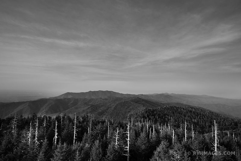 GHOST FOREST CLINGMANS DOME SMOKY MOUNTAINS BLACK AND WHITE