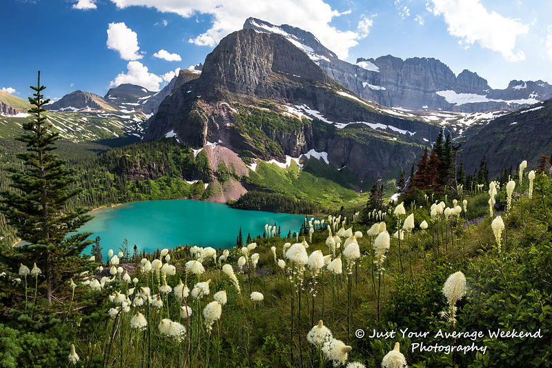 Grinnell Lake Beargrass