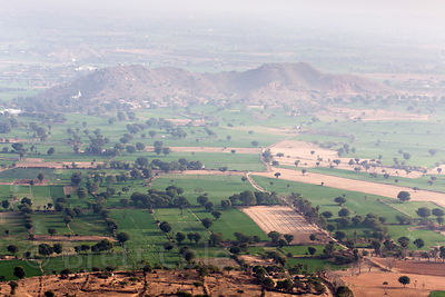 Wheat fields in the desert near Nand village, Rajasthan, India