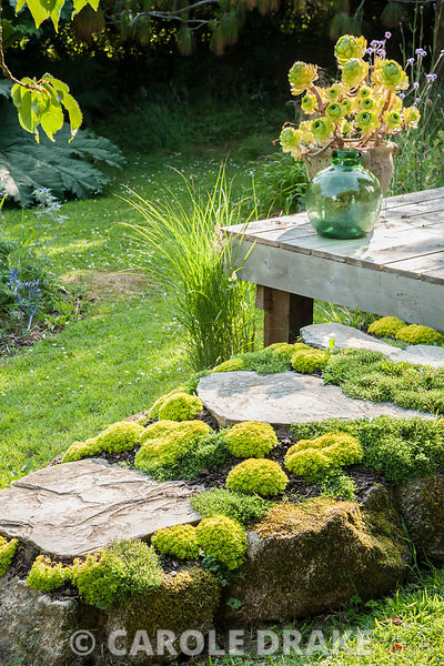 A raised section of path encrusted with mounds of Saxifraga 'Cloth of Gold' leads up to the deck around Sara's garden office,...
