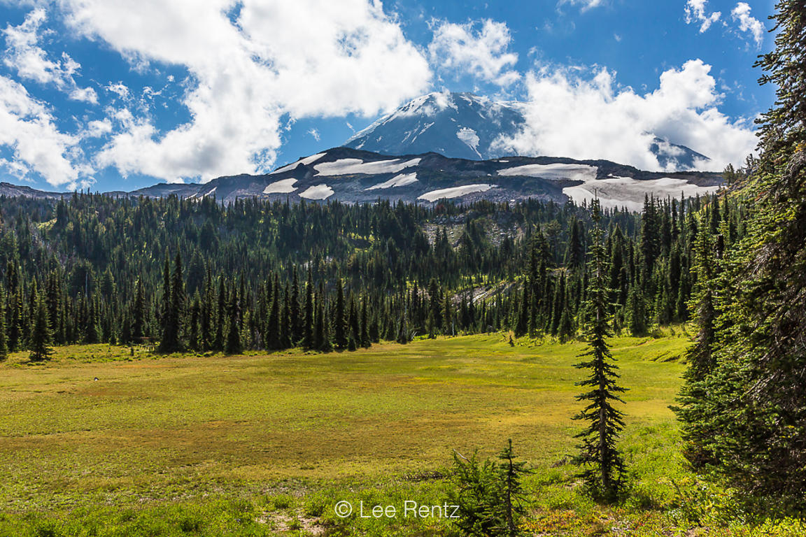 Subalpine Meadow near Killen Creek in the Mt. Adams Wilderness