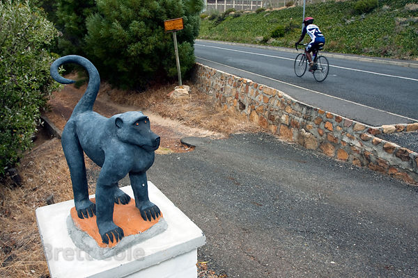 Chacma baboon statue in Simon's Town, center of the conflict between people and baboons on the Cape Peninsula, South Africa