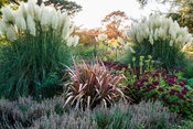 Herbaceous and grasses garden features large clumps of pampas grass, Cortaderia, grasses such as miscanthus and flowering pla...