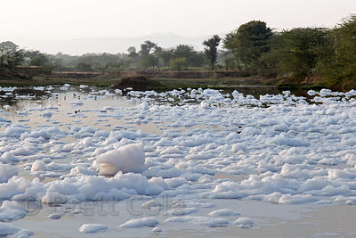 Fertilizer runoff from nearby flower farms creates thick white foam in lakes near Maseena village, Rajasthan, India