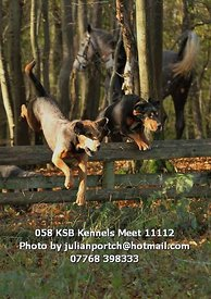 058_KSB_Kennels_Meet_11112