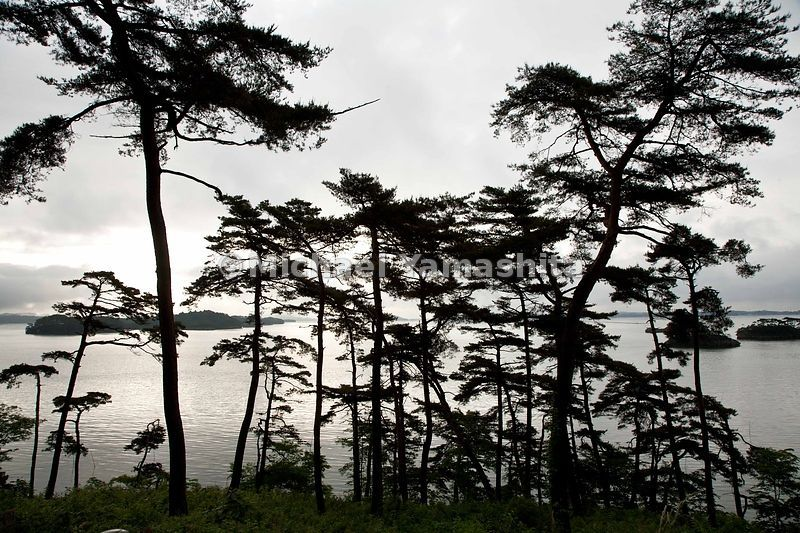 Sunrise on Matsushima's famous pines and pine clad islands.