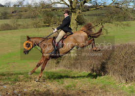 Ashley Bealby jumping a big hedge at Ladywood - The Cottesmore Hunt at Ladywood