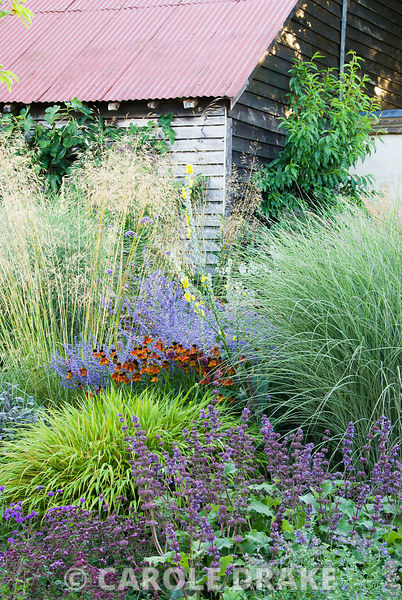 Colourful clumps of Hakonechloa macra 'Alboaurea', salvia, Origanum vulgare, Helenium 'Moerheim Beauty' and Perovskia 'Blue S...