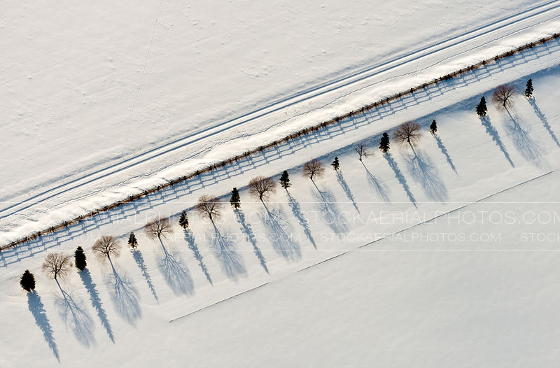 Row of Trees during a prairie winter