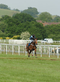 Paddy The Optimist galloping for the last fence
