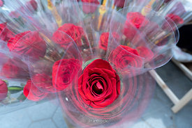 A bouquet of roses in preparation for Saint Jordi Day also known as Saint George's day in Barcelona, Spain.