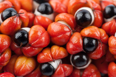 fresh guarana fruits