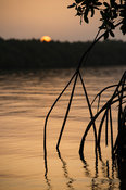 Sunset over a mangrove creek in Bao Bolon Wetland Reserve, Tendaba, the Gambia