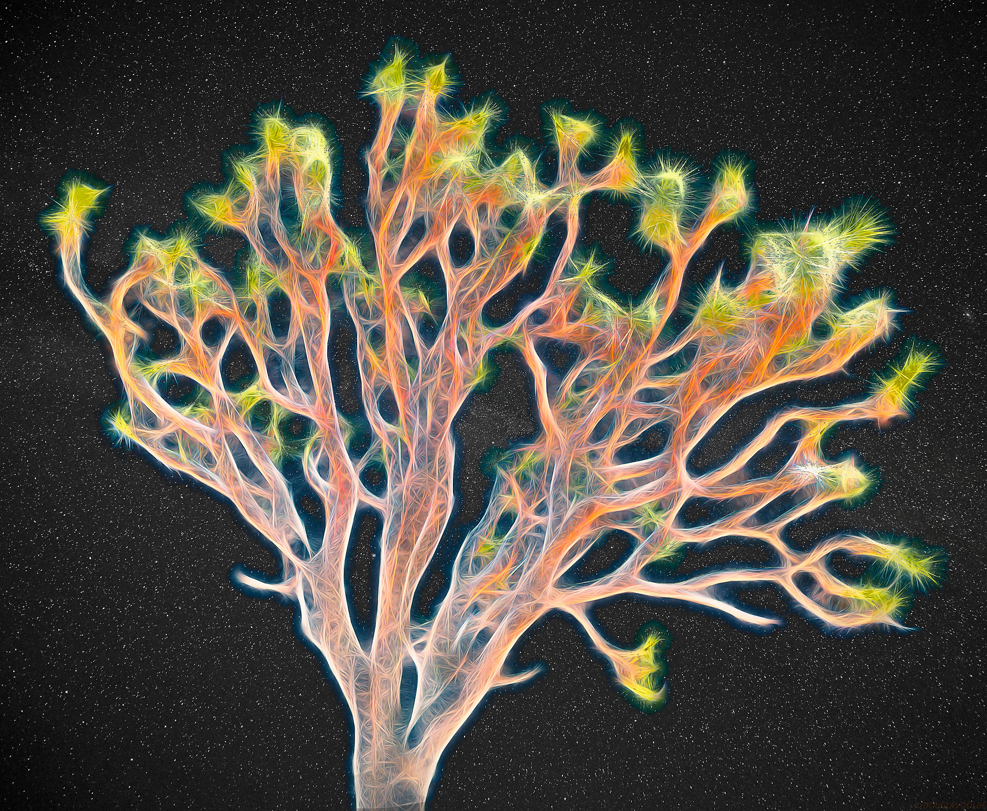 X-Ray Joshua Tree