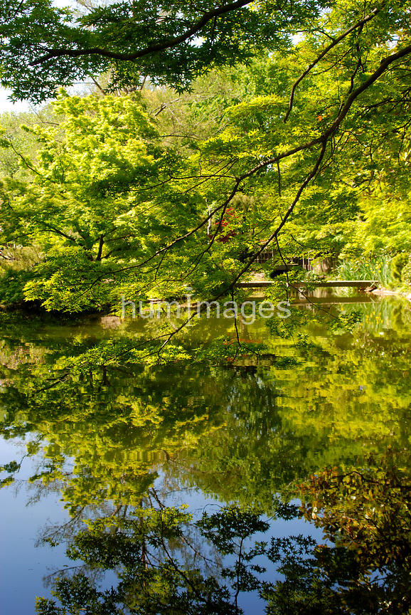 Japanese Gardens  (trees and pond)