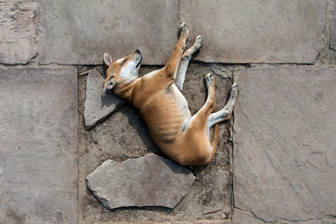 A stray dog puppy in Varanasi, India.