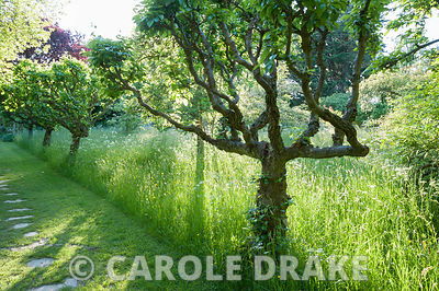 Grassy mown paths lead beneath wooden arbour into the meadow and along a line of espaliered fruit trees toward the formal gar...
