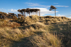 Formby Pines