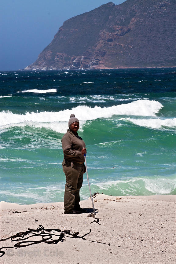 Park Service baboon monitor on the beach at Buffels Bay, Cape Peninsula, South Africa