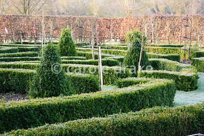 Formal potager garden with clipped box and trained fruit trees at The Down House, Hampshire in winter