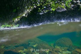 Split Underwater and Above Water View of Eagle Creek