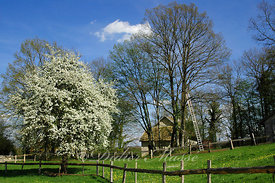 Un printemps Franc-Comtois Nancray Doubs 04/05