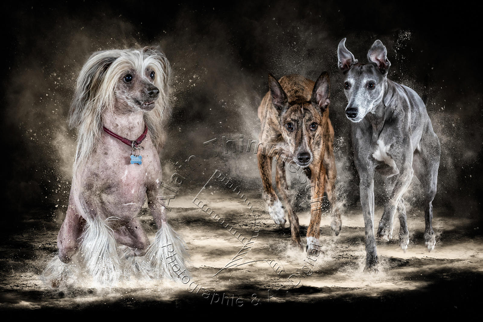 Art-Digital-Alain-Thimmmesch-Chien-766