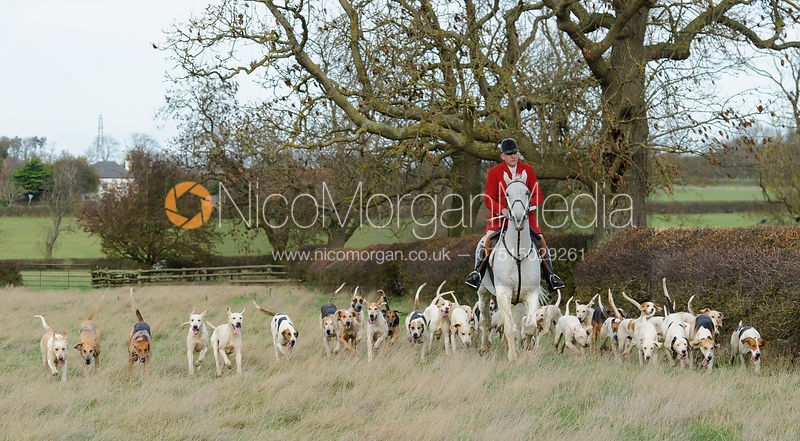 Peter Collins and the Quorn Hunt hounds