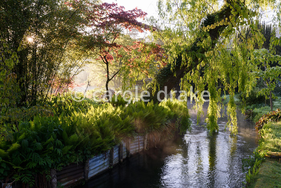 A weeping willow leans over a tributary of the River Avon in the Japanese garden at Heale House, Middle Woodford, Wiltshire o...
