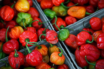 Locally grown bell peppers for sale at a wholesale market in Amish country, Lancaster, Pennsylvania