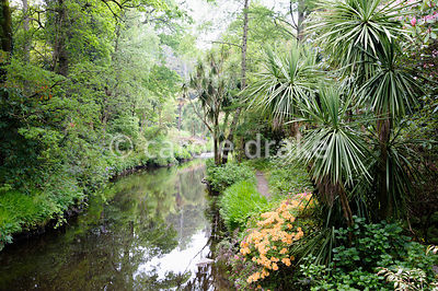 Rhododendrons, Cordyline australis and azaleas beside the River Vartry that flows through the garden.