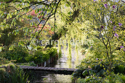 A weeping willow hangs over a tributary of the River Avon running through the Japanese garden at Heale House, Middle Woodford, Wiltshire