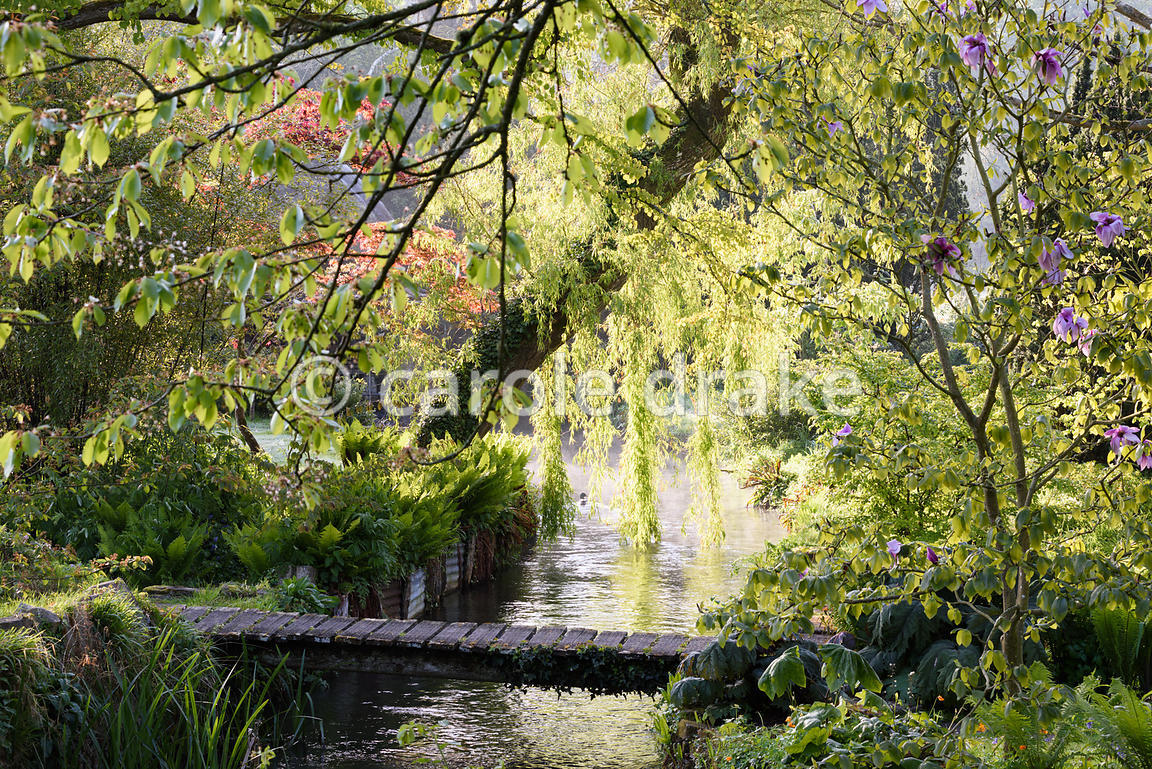 A weeping willow hangs over a tributary of the River Avon running through the Japanese garden at Heale House, Middle Woodford...