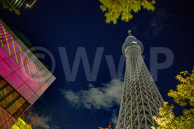 Skytree by Night
