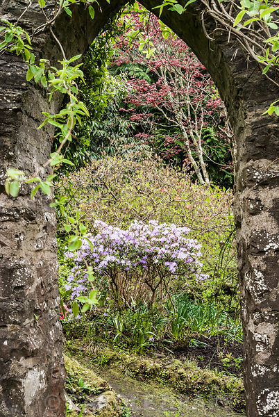 View through a pointed arch opening in the kitchen garden wall that leads into the first wood, with azaleas coming into flowe...