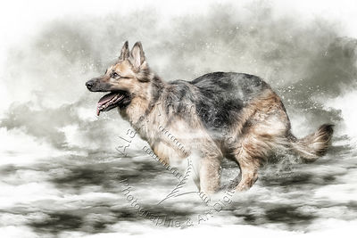 Art-Digital-Alain-Thimmesch-Chien-631