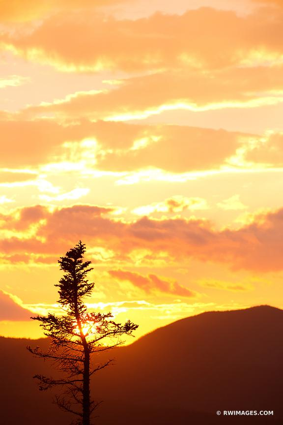 SUNSET TREE KANCAMAGUS PASS WHITE MOUNTAINS KANCAMAGUS HIGHWAY NEW HAMPSHIRE COLOR VERTICAL