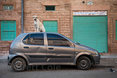 Dog standing atop a car in Jodhpur, Rajasthan, India