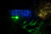 Bridge covered with a net of blue lights behind green illluminated Gunnera manicata at Abbotsbury Subtropical Gardens in October
