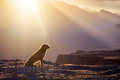 The highest altitude stray dog I've ever photographed in India, at 12,350 feet near Nimmu village, Ladakh, India