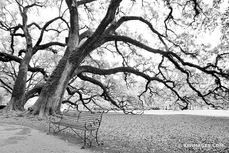 LIVE OAKS AND IRON BENCH NEW ORLEANS LOUISIANA BLACK AND WHITE