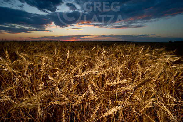 Grain photos