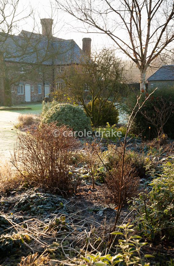 Frosty garden with mixed borders, clipped evergreens and white stemmed birches with Elizabethan house beyond.