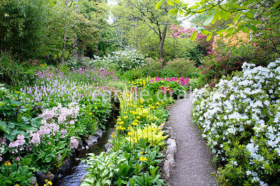 Lush streamside planting includes hostas, candelabra primulas such as yellow P. prolifera and pink P. japonica 'Apple Blossom...