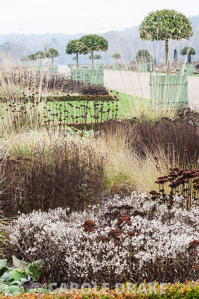 Box edged beds framing the central path through the Italian garden are full of bleached seedheads and faded grasses including...