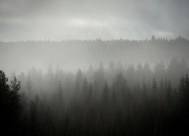 Granskog / The spruce forest, Elverum, Norway