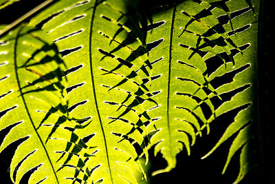 Sunlight through ferns