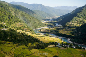 Terraced rice fields and Mo Chhu river in Punakha, Bhutan.