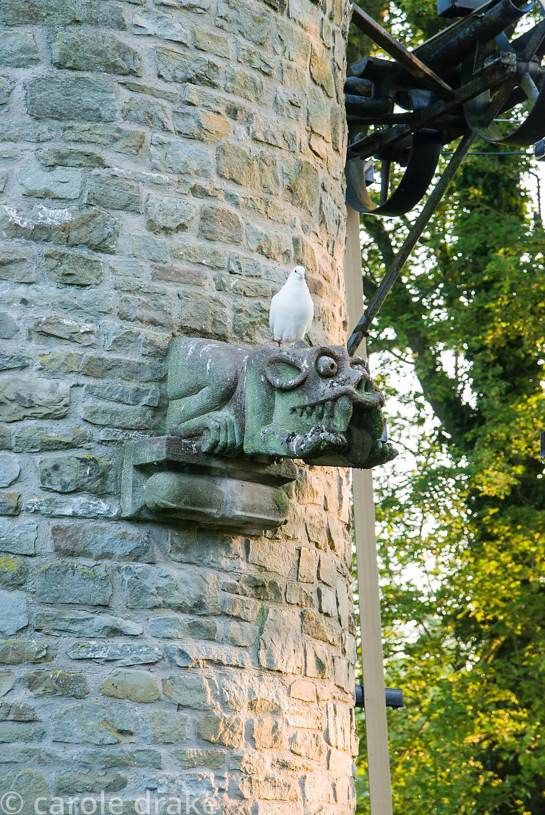 Dove perched on gargoyle on dovecot/water tower. Westonbury Mill Water Garden, Pembridge, Herefordshire, UK