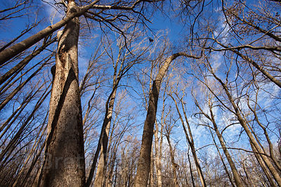 Remnant late succesional hardwood forest in seldom visited area near Goshen Park, Montgomery County, Maryland